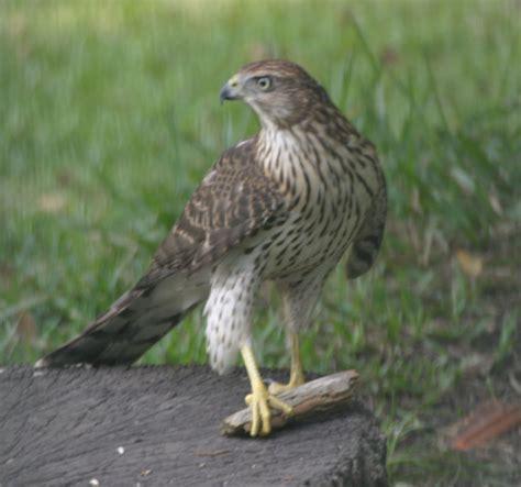 best 28 types of birds in louisiana louisiana bird