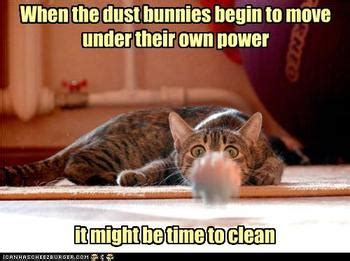 Grumpy cat memes crazy memes on grumpy cat expression all. Here Are Some Funny House Cleaning Pictures. Enjoy! | Bit A Bliss Cleaning
