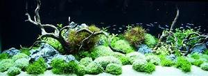 Pflanzen Wenig Licht : licht im aquarium ~ Markanthonyermac.com Haus und Dekorationen
