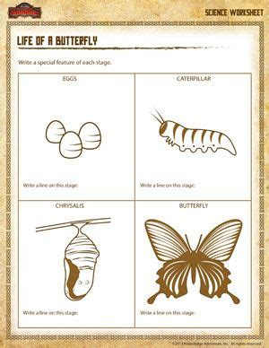 life cycle of a butterfly printable 3rd grade science
