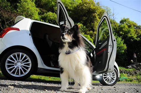hund im auto transportieren hundemagazin wissenswertes 252 ber unsere vierbeiner