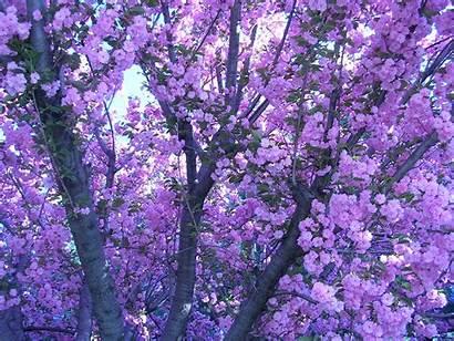 Aesthetic Backgrounds Background Pastel Purple Laptop Lavender