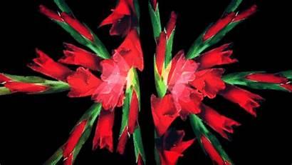 Flowers Flower Animated Timelapse Alternative Bloom Gifs