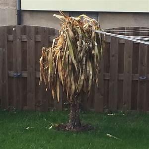 Yucca Palme Winterhart : lebt meine yucca palme noch pflanzen garten ~ A.2002-acura-tl-radio.info Haus und Dekorationen