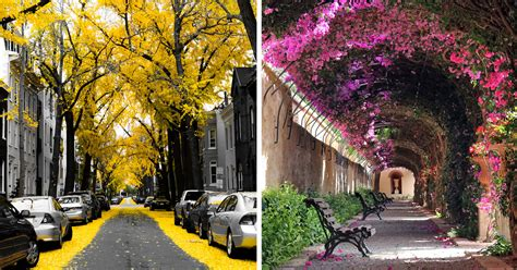 worlds  magical streets shaded  flowers