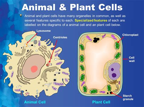 Cell Biology & Biochemistry Seriesset 3  Ppt Video Online Download