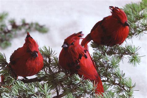 Cardinal Decor - decorating with birds for the season