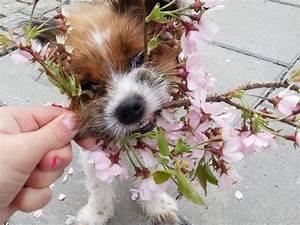 Tiere Vertreiben Ultraschall : hunde und katzen vertreiben effektive hausmittel zur ~ Articles-book.com Haus und Dekorationen