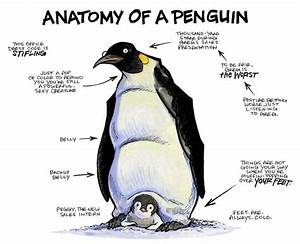 Anatomy Of A Penguin
