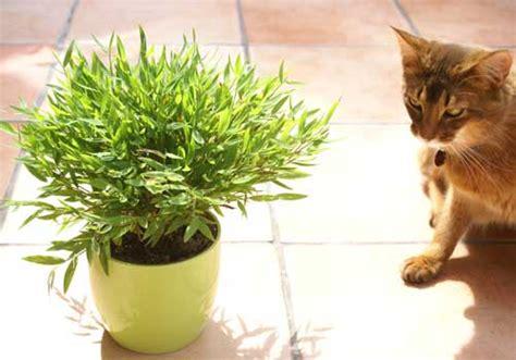 Pflanzen Für Katzen Geeignet by Ungiftige Pflanzen F 252 R Katzen Mit Fotos Wichtigen