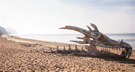 giant dragon skull discovered  dorset beach  poke