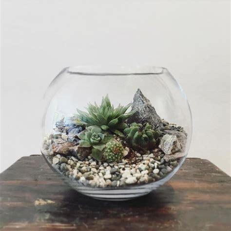 small terrarium plants desert world terrarium small bioattic specialty plants