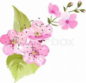 Sakura Blossom clipart japanese cherry blossom - Pencil ...
