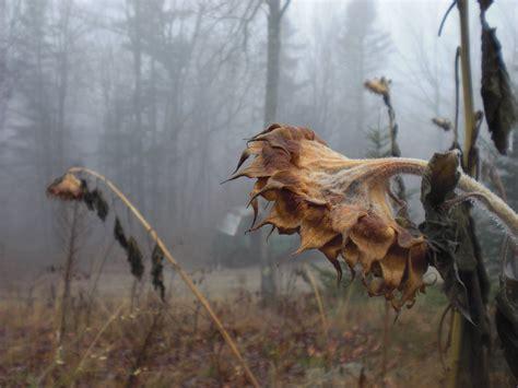 Dead Flower Photography