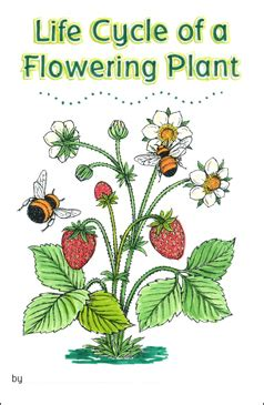 life cycle   flowering plant printable mini books