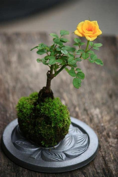 plante d intérieur originale savourez la beaut 233 de la plante d int 233 rieur dans notre galerie