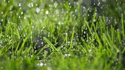 Grass Rainy Rain Background Jooinn Sunshine Shower