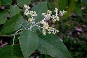 Guía práctica de plantas medicinales mexicanas