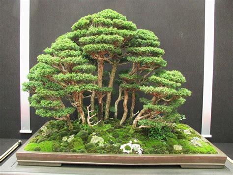 Bonsai Baum Preis by Vsquare Retail Imported Cedar Bonsai Tree Seed Price