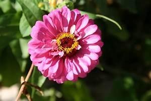 Bilder Blumen Kostenlos Downloaden : rund hintergrundbild mac hintergrund bilder hintergrundbilder kostenlos ~ Frokenaadalensverden.com Haus und Dekorationen