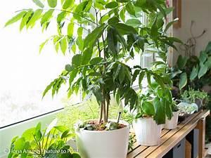 Pflanzen Im Treppenhaus : der h ngende indoor garten wo blumenbilder wachsen ~ Orissabook.com Haus und Dekorationen