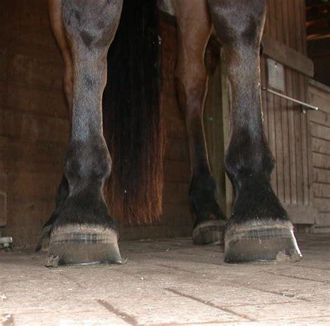 hoof shape equine soundness effect does feet si
