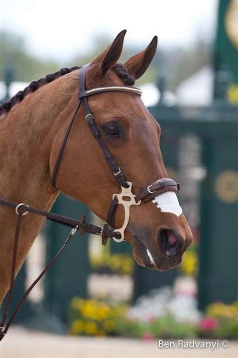 horse hackamore bridle bitless types bridles bit horses arabian tack jumping strong ponies western final peace controls star dressage baroque