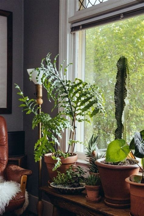 Plants For Windowsill by Decoration 57 Ideas As You Discover The Potential Of