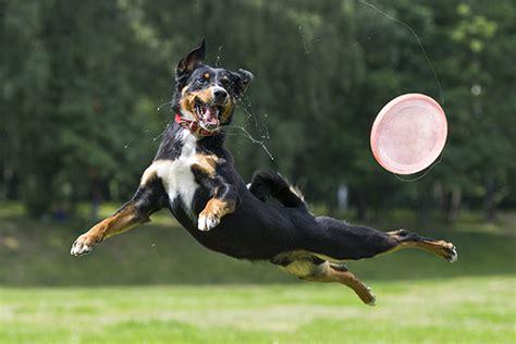 dog zoomies   happen
