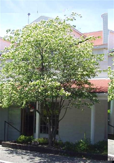 washington hawthorn nys horticulture study guide for youth