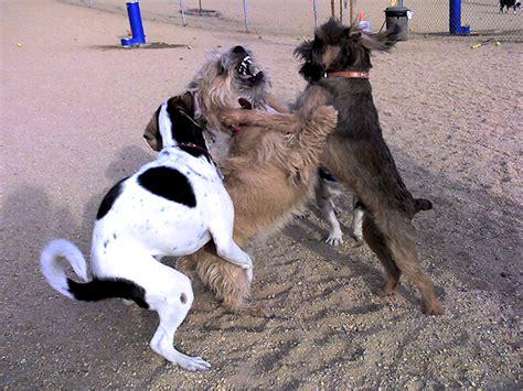 mujer cojiendo con perro y pegada por el culo mujer