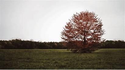 Wind Tree Autumn Animated Gifs Leaves Nature