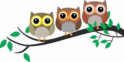 Owl Tree Owls Clipart Bird Clip Cartoon