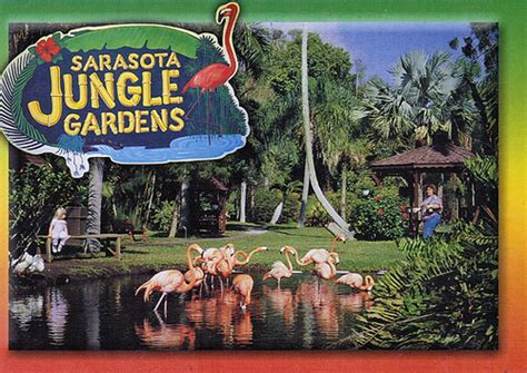 sarasota jungle gardens sarasota jungle gardens 2 karyn schronski flickr