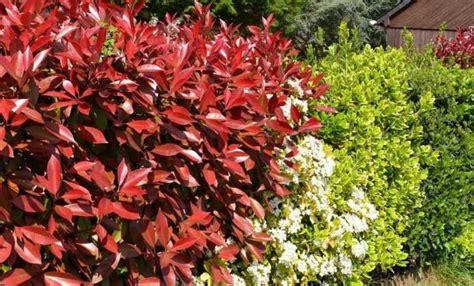 haie fleurie quels arbustes planter quand et comment