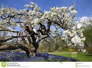Baum Mit Weißen Blüten : wei e baum bl te stockfoto bild von barke blau gras ~ Michelbontemps.com Haus und Dekorationen