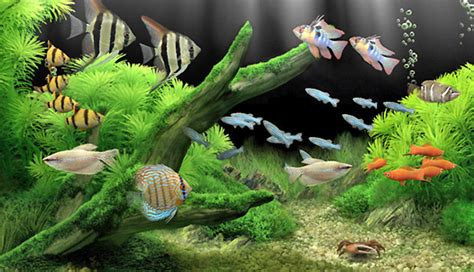 vente poisson d aquarium poisson aquarium tunisie