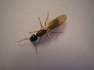 cool science dad flying ants