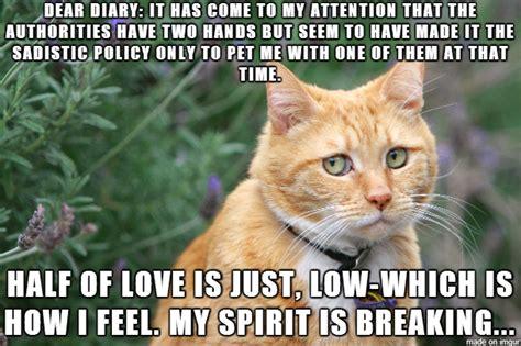 farewell cat meme www pixshark com images galleries with a bite