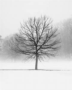 Tree Winter Landscape Photography Black and White Landscape