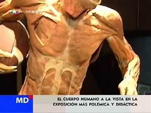 """""""Bodies"""", exposición del cuerpo humano con cadáveres YouTube"""