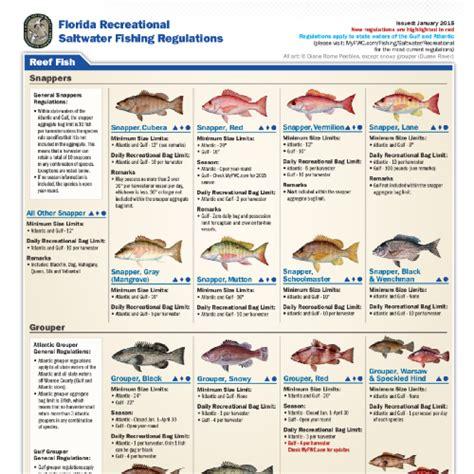 saltwater florida fishing regulations