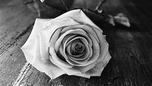 Comment Faire Secher Une Rose : comment faire secher une rose petite fleur petite fleur ~ Melissatoandfro.com Idées de Décoration