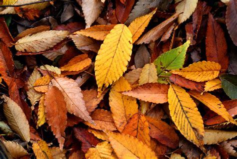 Irish Autumn Expectations Vs The Unavoidable Reality