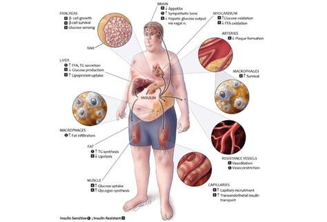 metabolic diseases functional medical system