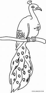 Peacock Coloring Pages Printable Colouring Peacocks Bird Printables Cool2bkids Eagle Books Drawings sketch template