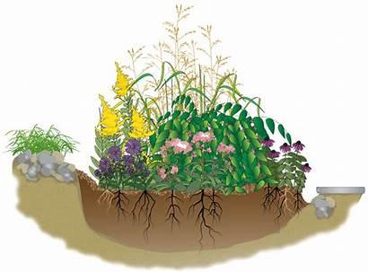 Rain Garden Native Gardens Plants Natural Soil