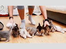 10 Katzenbabys