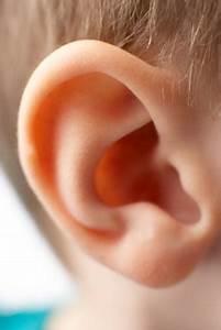 Diagram Ear For Kids