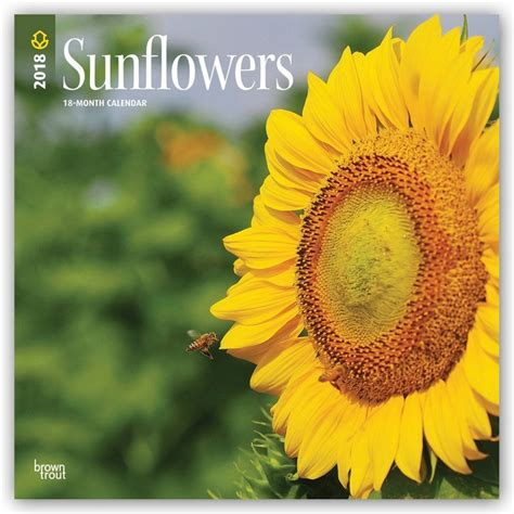 sunflowers calendars ukposterseuroposters